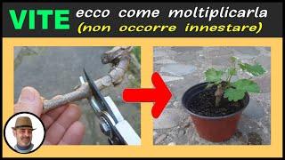 RIPRODURRE LA VITE PER TALEA, como reproducir el tornillo para talea, reproduce the screw for talea
