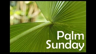 Homily at Palm Sunday, Christ the King Madisonville, KY, April 5, 2020