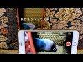 ボタンインコのボタンちゃん小ネタ集8 の動画、YouTube動画。