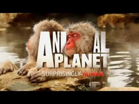 Animal Planet HD UK  Continuity 13102014 King Of TV Sat