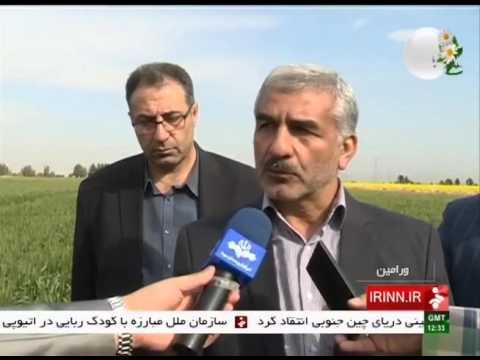 Iran Varamin county, Wheat harvest برداشت گندم شهرستان ورامين ايران