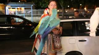 Mallorca Parrots Fight, Spain