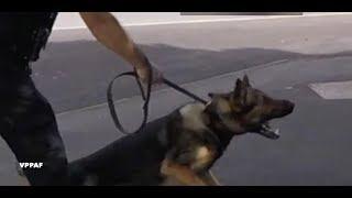 police dog bites car thief