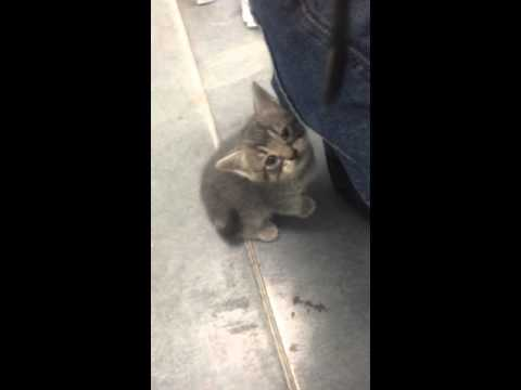 cleaning-dirt-&-scabs-out-of-kitten's-eyes-(kitten-all-better)