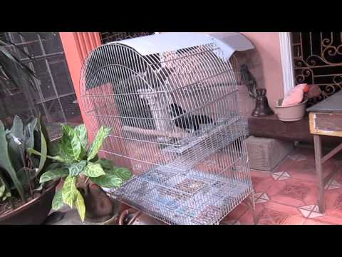 مزرعة الببغاوات 2 parrot farm manila