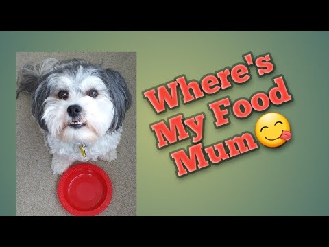 Cute and Smart Dog, Get His Plate To Have Some Food.