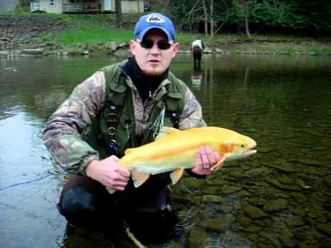Palomino trout release driftwood pa youtube for Pa out of state fishing license