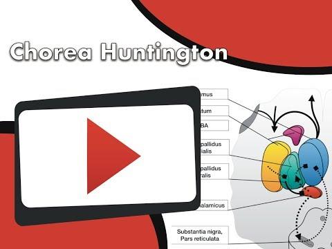 Basalganglien   Chorea Huntington Clipdocs.de