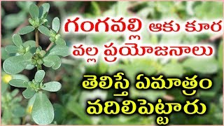Health Benefits of Gangavalli kura - Purslane Health Benefits - Purslane Nutrition Facts