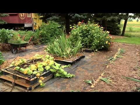 Prairie Yard & Garden: Straw Bale and Pallet Gardening
