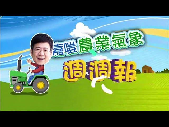 2020.11.16─嘉愷農業氣象週週報