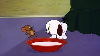 Том и Джерри - История про щенка (Серия 80)