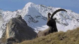 Video Gran Paradiso National Park - Italy download MP3, 3GP, MP4, WEBM, AVI, FLV November 2017