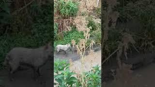 Barletta, cane abbandonato lungo canale Ciappetta Camaggio