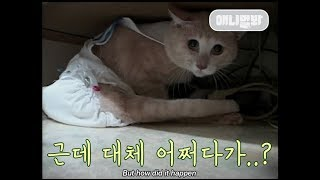 A cat in diapers..?