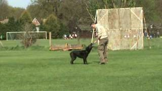 Dan Bucur-dog Training London-www.facebook.com/canisfidelislondon