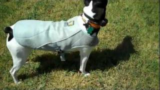 Ruff Wear Cooling Vest For Dogs - Product Review | Redeeming Dogs - Flower Mound Dog Training