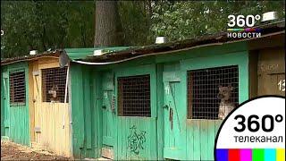 В Ступинском районе ликвидируют приют для животных