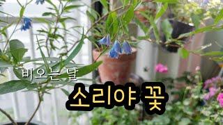 베란다미니정원/6월 마지막주 베란다정원