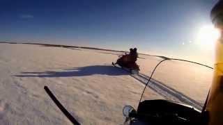 Охота на волка в зимний период с использованием снегохода