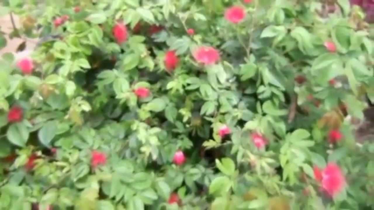 Insectos ben ficos para las plantas youtube - Plantas para ahuyentar insectos ...