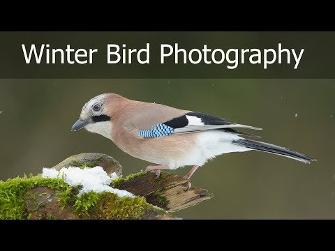 Bird Photography In The Snow: Photographing From My Hide