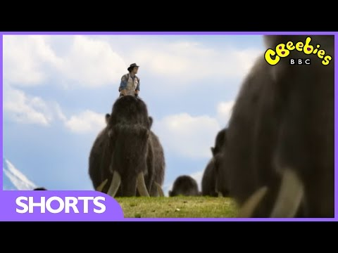 CBeebies: Andy's Prehistoric Adventures - Woolly Mammoth Tusk
