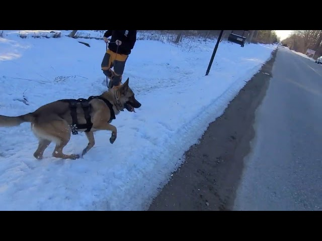 K9 Tracking Training
