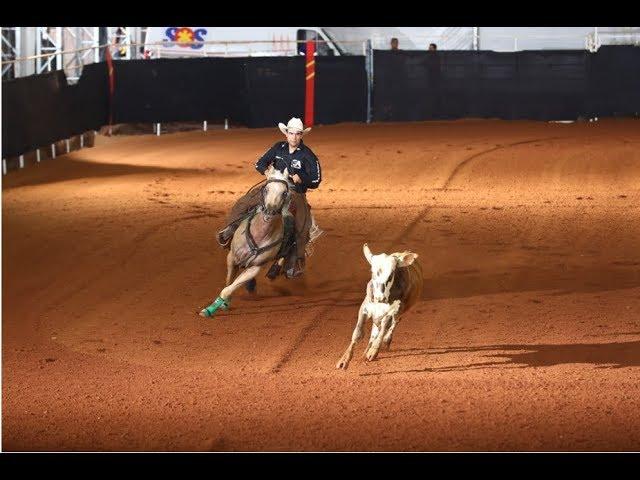 A versatilidade esportiva do Quarto de Milha e dicas para o verão e nutrição para cavalos atletas