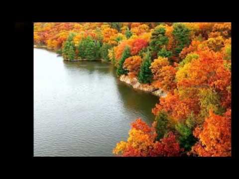 из фото от Светланки Звёздочкиной  Альбом Осень золотая