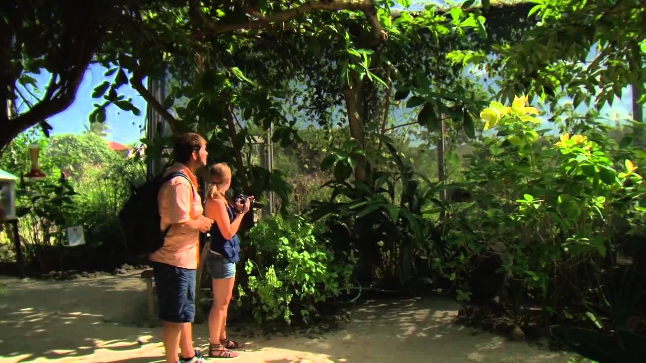 St Maarten Island And Butterfly Farm Tour