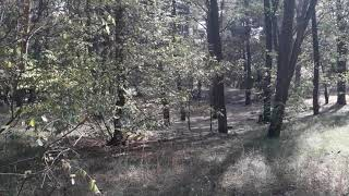 Мы в лесу недалеко от Новой Каховки !