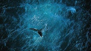 Planet Ocean [RU] - фильм  (Yann Arthus-Bertrand & Michael Pitiot)