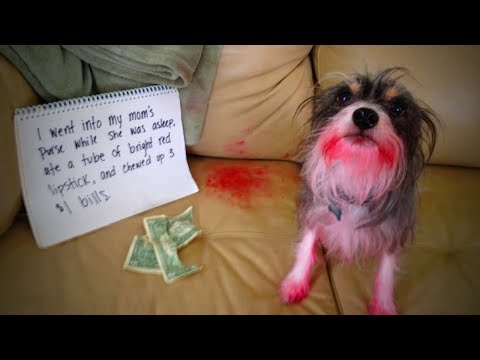 Funny Guilty Dogs 🐶😂 Funny Dogs Reactions When Caught Guilty  (Part 2) [Funny Pets]