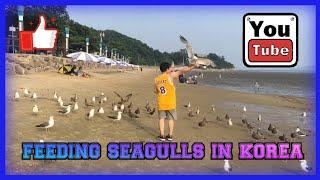 FEEDING SEAGULLS #SEAGULL #KOREA Song: Chris Lehman - Flash (Vlog No Copyright Music) Music promoted by Vlog No Copyright Music. Video Link: ...