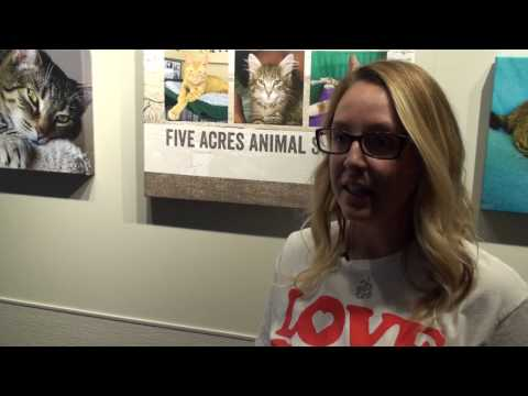 Cat Yoga at Five Acres Animal Shelter
