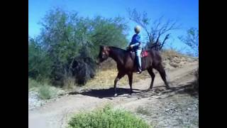 For Sale Quarter Horse Bay Mare 7 years old/Trail Horse/Price $3500
