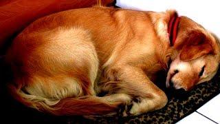 Hund beobachtet Herrchen jede Nacht beim Schlafen - Der Grund ist herzergreifend!