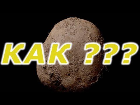 Фото картошки продали за 1 миллион долларов... КАК???