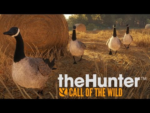 Goose Hunting Tutorial (theHunter: Call Of The Wild)