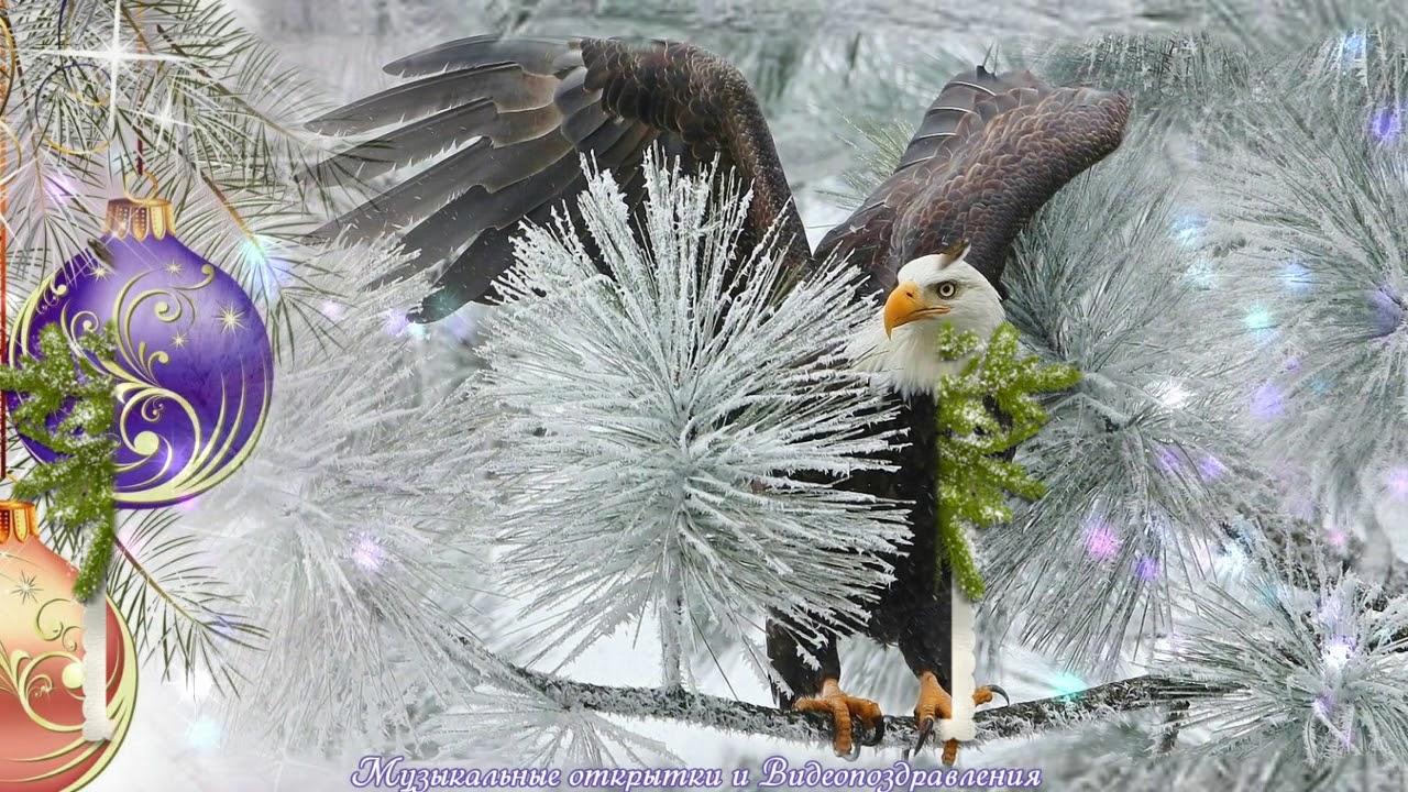 Годовщину, видео поздравление с годом парящего орла