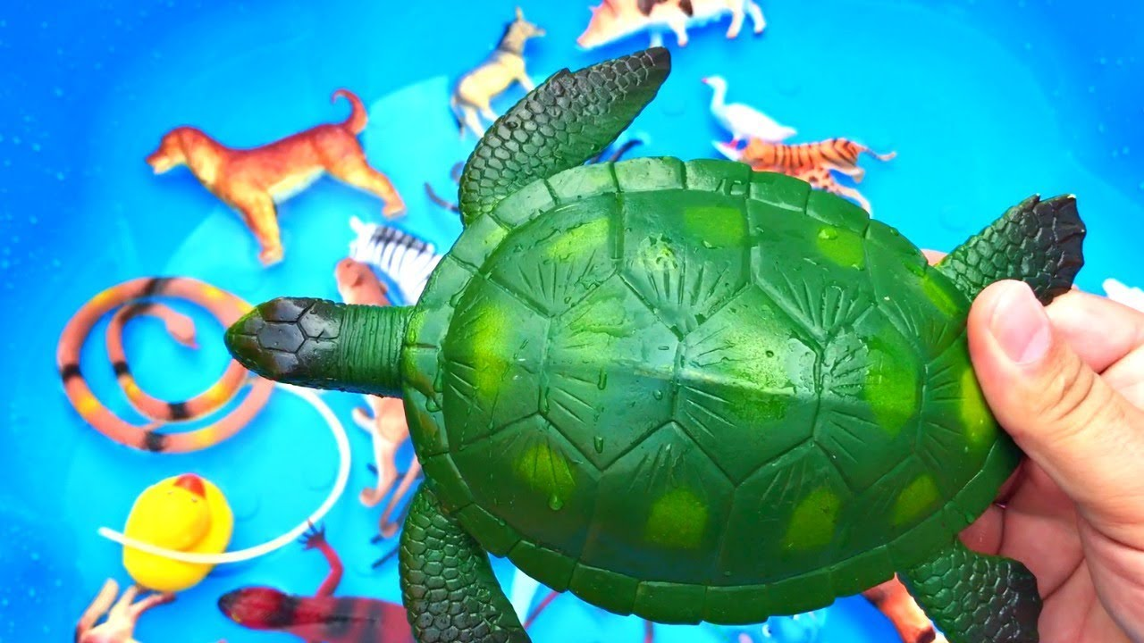 Learn Colors With Wild Animals Blue Pool Toys Colors For Kids Children Youtube