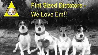 Baby Dogs & Jack Russell's to Music  For all Dog Lovers