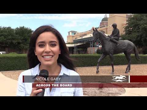 QUARTER HORSE VS THOROUGHBRED