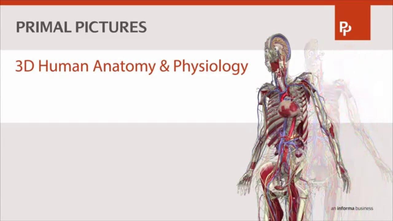 Primal Pictures 3D Human Anatomy & Physiology - YouTube