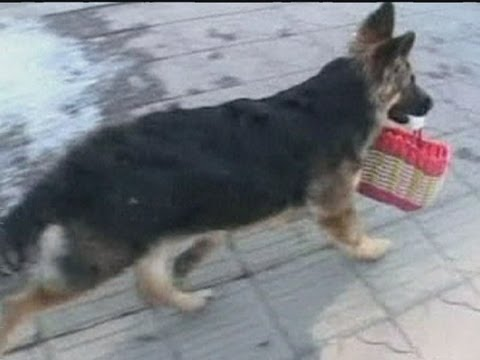 Chinese dog goes shopping