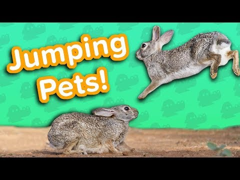 Jumpy Pets! // Funny Animal Compilation