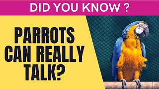Can parrots really talk ? Truths about Parrots!!