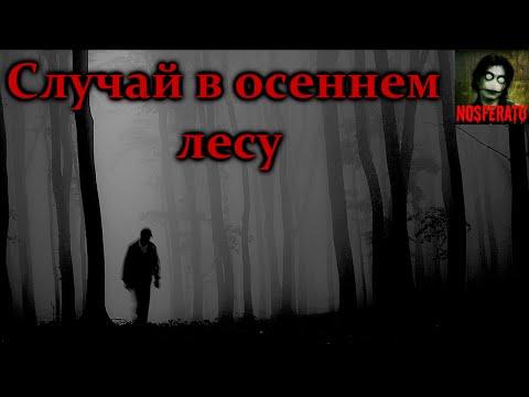 Истории на ночь - Случай в осеннем лесу