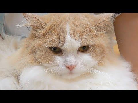 삐지니까 더 귀여운 고양이 (표정주의)